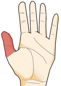 手相からみた親指