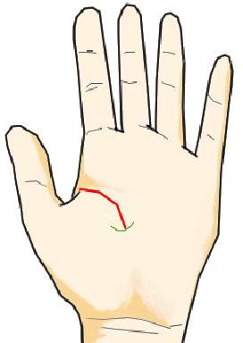 短い生命線の末端に曲線(弓型)の妨害線が生じている