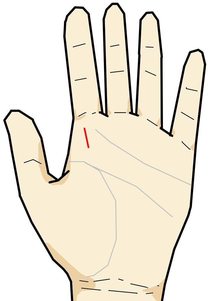 ・引き立て線  人差し指の付け根下に現れる縦向きの線で、目上からの引き立てを受ける人に現れる線です。