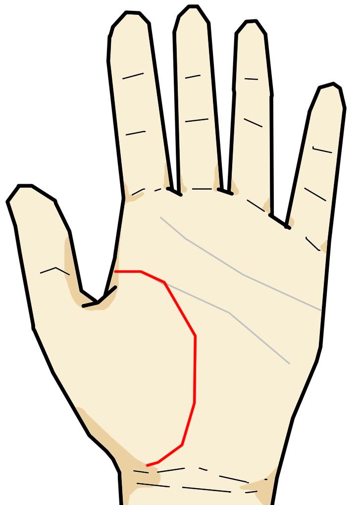 生命線は親指の付け根の金星丘を弓形に囲むように生じている線です。知能線・感情線・生命線は手相三大線と言われます。その名の通り、自身の生命力を意味する他、自分自身の状態を反映している線といえます。