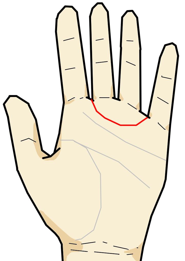 金星帯は人差し指と中指の間から、薬指と小指の間に向けて弓形を描いて生じる線です。美術的センスに優れる人に現れる相で、この線が生じている人は若い頃から性的関心が強い人と言われています。