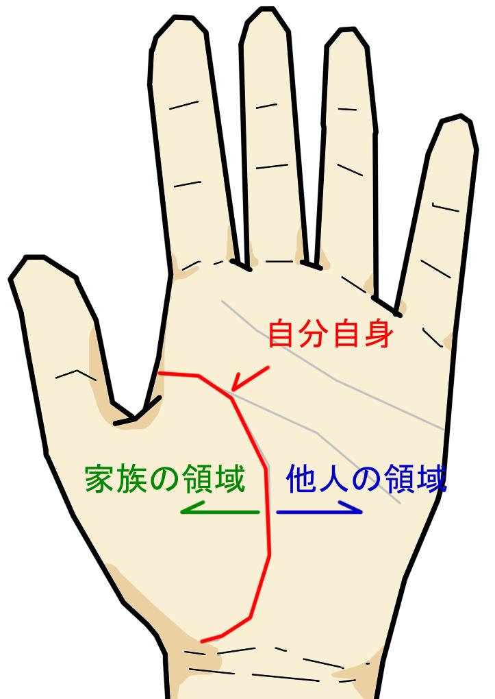指の付け根である金星丘には様々な線が現れます。 この部位は「自分自身・身内・家族」に関する相が現れるという特徴があります。